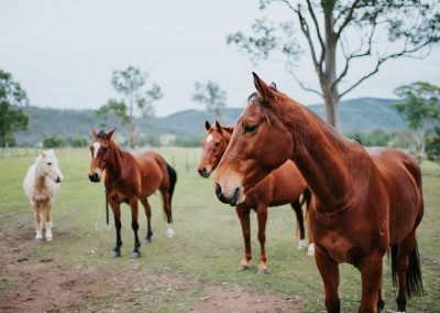 four horses in a field